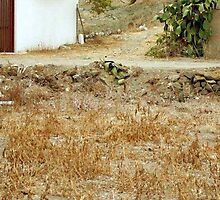 <º))))>< LETS SEE WHO HAS A KEEN EYE CAN U FIND THE CAT IN THIS PICTURE ?<º))))><  by ✿✿ Bonita ✿✿ ђєℓℓσ