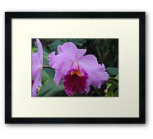 Lavender & Lace Framed Print