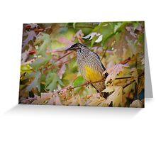 Red Wattle Bird Greeting Card