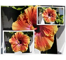 Orange Single Hibiscus Collage Poster