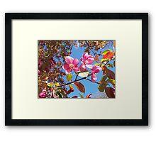 Pink Crabapple Blossoms Framed Print