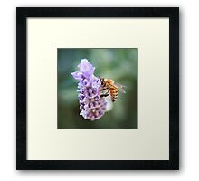 Bee Love Framed Print