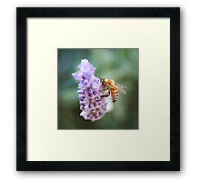 Bee Love Framed Print