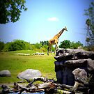 The Lonely Giraffe by Laurie Perry