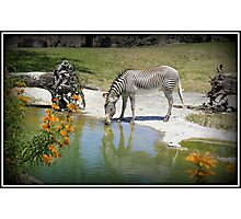 Striped Beauty Photographic Print