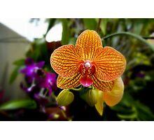 Orange Orchid Photographic Print
