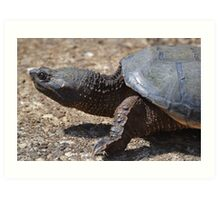 Moving At The Speed Of Turtle. Art Print
