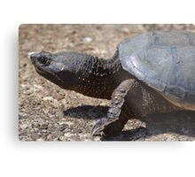 Moving At The Speed Of Turtle. Metal Print