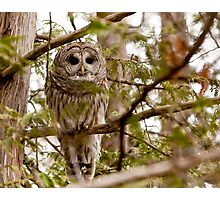 "Barred Owl - ""Pleased to Meet Whoo"" Photographic Print"