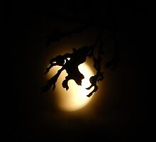 OAK LEAVES LIKE FINGERS AROUND THE MOON by Sandra  Aguirre