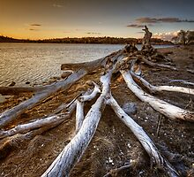 Wooden Legs by Bob Larson
