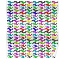 Rainbow whales Poster