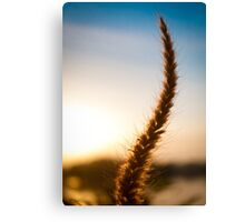 Paddy at sunset Canvas Print