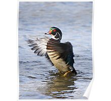 The little wood duck that could Poster