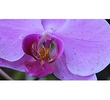 Natural Beauty, The Orchid Photographic Print