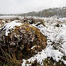 Snowy Landscape by Michael Gay