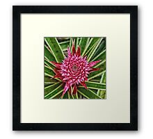 Fresh Pineapple Framed Print