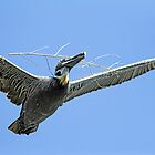 Pelican Nesting Time by Deborah  Benoit
