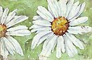 Shasta daisies in my garden by Maree Clarkson