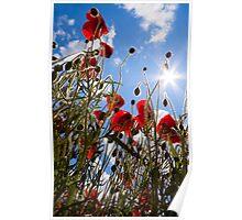 Sun poppies. Poster