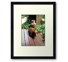 Tired sausage dog Framed Print