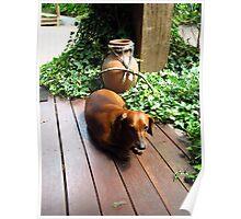 Tired sausage dog Poster