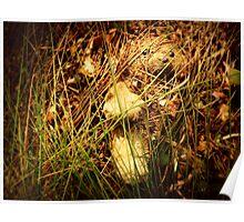 Little Bear Lost Poster