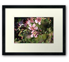 Ti Tree Framed Print