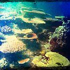 Underwater by PhilM031