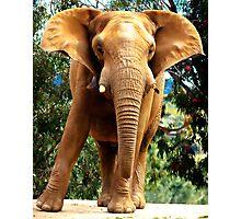 Elephant Alert Photographic Print