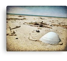 The Shell ~ Canvas Print