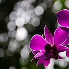 StrikingOrchid by peregrineRob