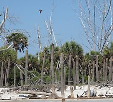 Unusual Palms on Egmont Key by TedT