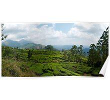 Munnar Tea Plantation Panoramic Poster