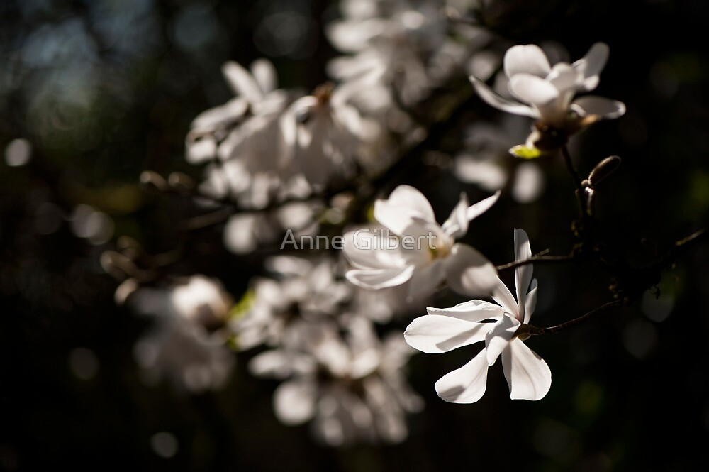 White Beauty by Anne Gilbert