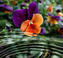 Pretty Pansy by vigor