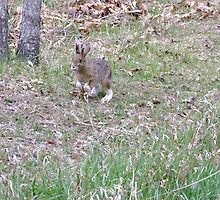 """""""Here comes Peter Cottontail, hopping down the bunny trail..."""" by Tracy Faught"""