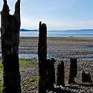 Rocky Beach by Randall Robinson