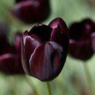 Black beauties by Lynn Starner