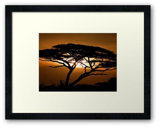 Flat top acacia at sunset by Linda Sparks