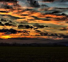 Sun set in a oil seed rape field by yampy