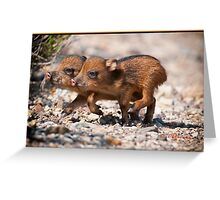 PIGS ON THE HOOF Greeting Card