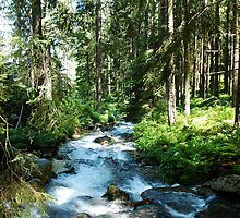 Forest during summer with stream by Magdalena Warmuz-Dent