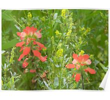 Indian Paintbrush and Yellow Flowers Poster