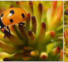 LADYBUG COLLAGE by Betsy  Seeton