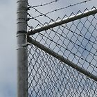Fence Sitter by nikspix