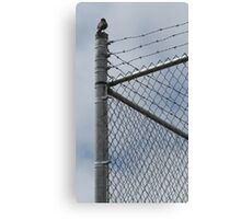 Fence Sitter Canvas Print