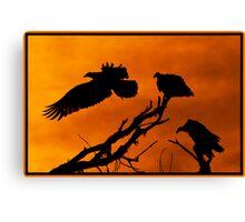 Vultures Roosting @ Sundown Canvas Print