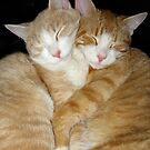 Hugs & Cuddles by Elizabeth Burton