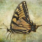 First Butterfly by vigor